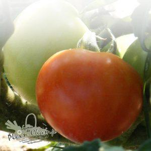 Tomate variété Ferline