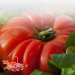 Tomate variété Grosse Charnue