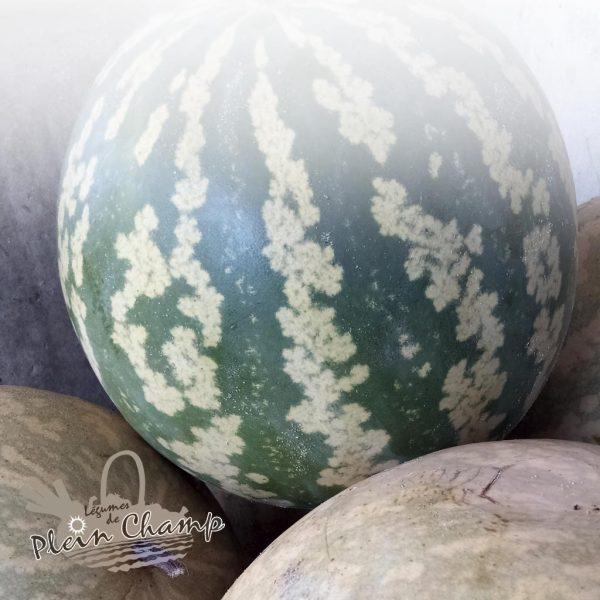 Melon à confiture